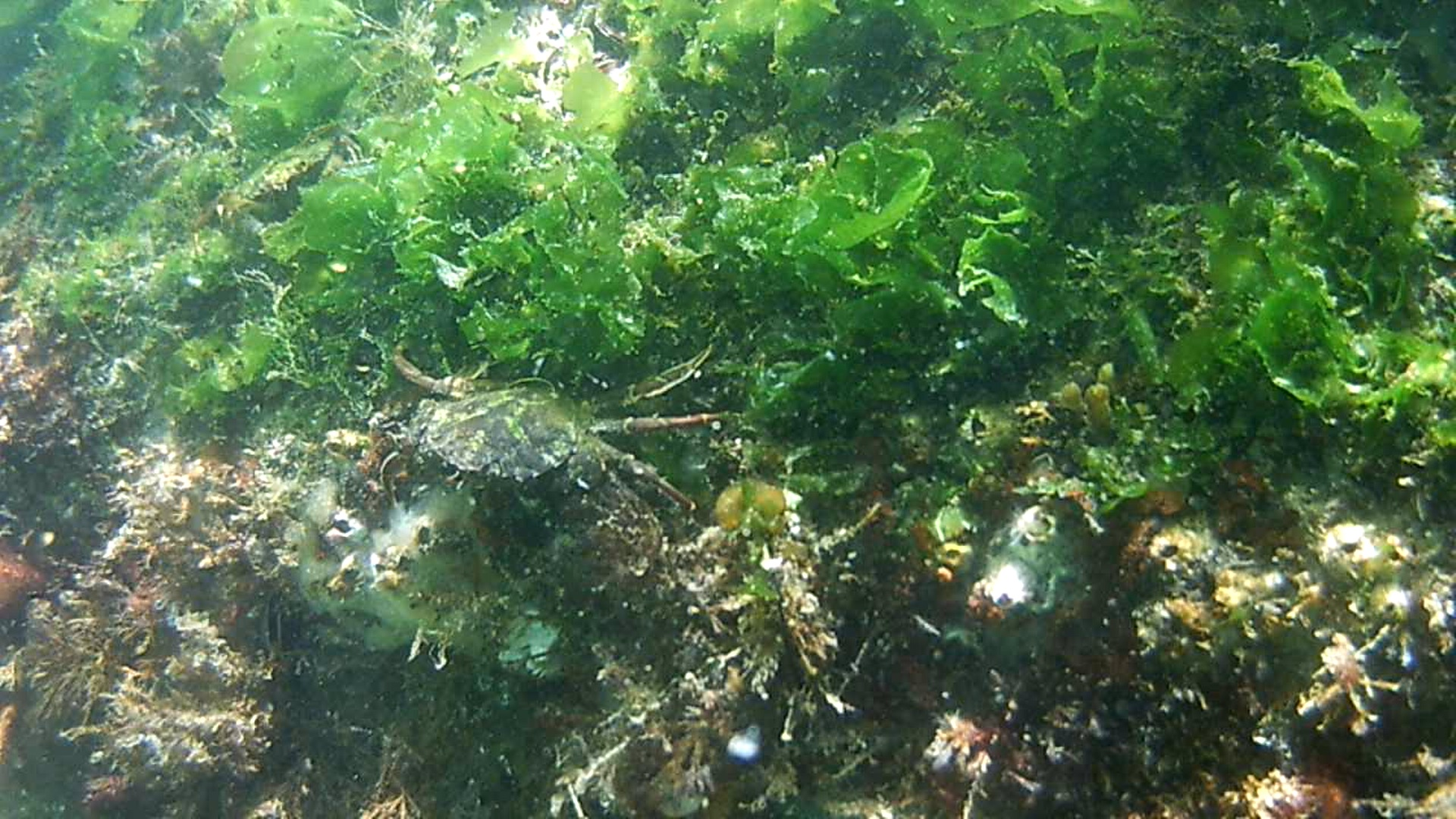 artificial_reef2